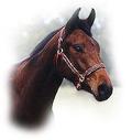 Horses club Arggamak